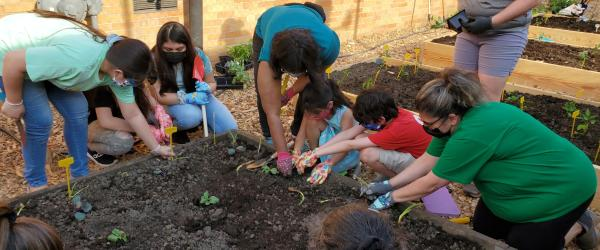 Archdiocese of Chicago Laudato Si' gardens growing.